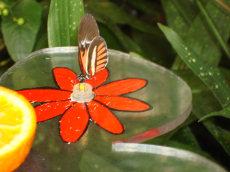 Vlinder in diergaarde Blijdorp
